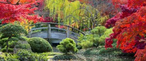 Japanese garden in the fall with bridge - photograph